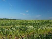 Ländliche Sommerlandschaft von Mittel-Russland Breites Feld mit patche Lizenzfreie Stockfotografie