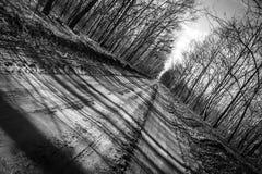 Ländliche Straße im Wald Lizenzfreies Stockfoto