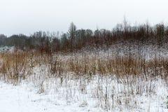 Ländliche Szene des Winters mit Nebel- und Weißfeldern Stockbild