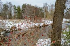 ländliche Szene des Winters mit Schnee und weißem Wald Stockfotografie