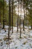 ländliche Szene des Winters mit Schnee und weißem Wald Lizenzfreie Stockfotos
