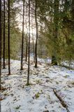 ländliche Szene des Winters mit Schnee und weißem Wald Lizenzfreies Stockbild