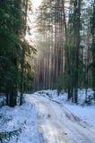 ländliche Szene des Winters mit Schnee und weißem Wald Stockfoto