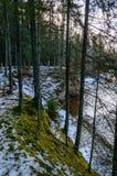 ländliche Szene des Winters mit Schnee und weißem Wald Lizenzfreie Stockbilder