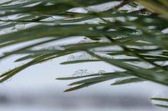 ländliche Szene des Winters mit Schnee und weißem Wald Lizenzfreie Stockfotografie