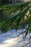 ländliche Szene des Winters mit Schnee und weißem Wald Stockbild