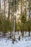 ländliche Szene des Winters mit Schnee und weißem Wald Stockfotos