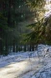 ländliche Szene des Winters mit Schnee und weißem Wald Lizenzfreies Stockfoto
