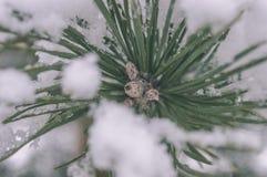 ländliche Szene des Winters mit Schnee und weißem Waldweinleseeffekt Stockbild
