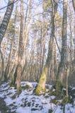 ländliche Szene des Winters mit Schnee und weißem Waldweinleseeffekt Stockfotografie