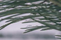 ländliche Szene des Winters mit Schnee und weißem Waldweinleseeffekt Stockfoto