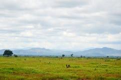 Ländliche Szene und Landschaft nahe Battambang, Kambodscha Lizenzfreies Stockbild