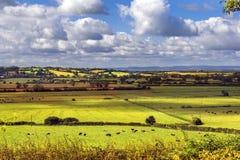 Ländliche szenische Ansicht von grünen Feldern, Salisbury, England Lizenzfreie Stockfotos