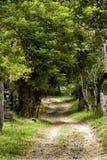 Ländliche Weglandschaftsbäume parken Arvi Santa Elena Antioquia- Medellin, kolumbianisch lizenzfreie stockfotos