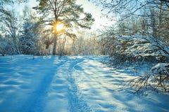 Ländliche Winterlandschaft mit Sonnenuntergang, dem Wald und der Straße Stockfotografie