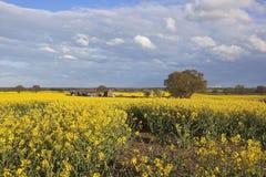 Ländlicher Bauernhof mit Canolafeldern in der Blume Lizenzfreie Stockbilder
