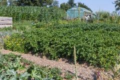 ländlicher Häuschengarten am heißen Sommertag von Juli Stockfoto