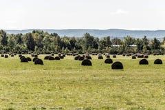 Ländlicher Ontario-Bauernhof mit der geernteten Feldlandwirtschaft mit Stroh emballiert Tiere Kanada-Landwirtschaft Stockfotografie