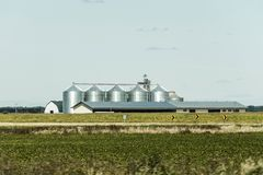 Ländlicher Ontario-Bauernhof mit Scheunen-Silospeicherlandwirtschaftstiere Kanada-Landwirtschaft Lizenzfreie Stockfotografie
