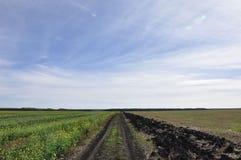 Ländlicher Schotterweg des Sommers zwischen zwei Feldern stockfotografie