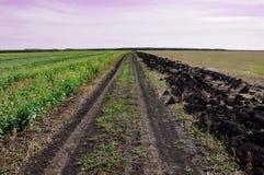Ländlicher Schotterweg des Sommers zwischen zwei Feldern stockbild