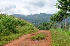 Ländlicher Schotterweg und grüne Wiese auf langem Weg lizenzfreie stockfotos