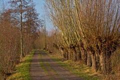 Ländlicher Weg mit pollarded Weiden auf der Seite Stockfotos