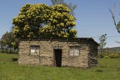 Ländliches afrikanisches Haus Stockfotografie