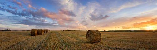 Ländliches Feld des Herbstpanoramas mit geschnittenem Gras bei Sonnenuntergang stockfotos