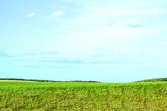 Ländliches Feld und Himmel des Panoramas Gr?nes Gras horizont stockfotos