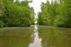 Ländliches Flandern, schöner Fluss Stockbild