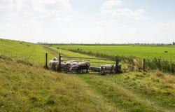 Ländliches Gebiet in der Sommerzeit mit Schafen hinter einem Zaun Stockfoto