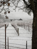 Ländliches Gebiet des Weinbergs im Winter Stockfotos