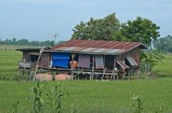 Ländliches Haus auf dem Reisgebiet in Thailand stockbild