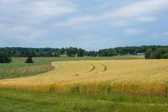 Ländliches Land-York County Pennsylvania Ackerland, an einem Sommer-Tag Stockbilder