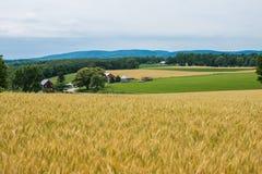 Ländliches Land-York County Pennsylvania Ackerland, an einem Sommer-Tag Lizenzfreie Stockfotografie