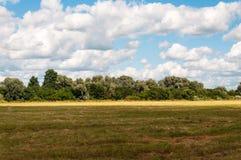 Ländliches Landschaftsfeld auf einem Hintergrund des Waldes und des bewölkten Himmels Lizenzfreie Stockfotos