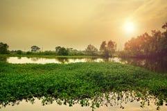 Ländliches Sumpfgebiet stockfoto