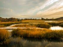 Ländliches Sumpfgebiet lizenzfreie stockfotos