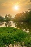 Ländliches Sumpfgebiet lizenzfreies stockbild