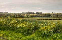 Ländliches Warwickshire, England Lizenzfreies Stockbild