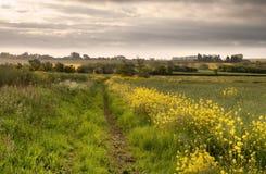 Ländliches Warwickshire, England Stockfotografie
