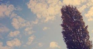 Längd i fot räknat av några höstliga sidor på ett träd som blåsas av vinden lager videofilmer