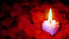 Längd i fot räknat av rosa kronblad med den rosa stearinljusbränningen för valentindag