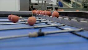Längd i fot räknat på äggproduktionslinje med ägget som graderar att bearbeta arkivfilmer
