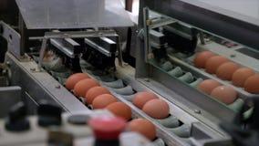 Längd i fot räknat på äggproduktionslinje med ägget som graderar att bearbeta lager videofilmer