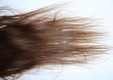 Länge krabbt brunt hår på en tonårs- flicka arkivfoto