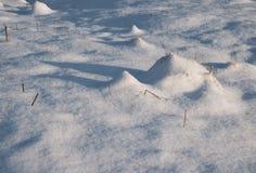 Längliche Schatten auf einer schneebedeckten Wiese Stockfotos