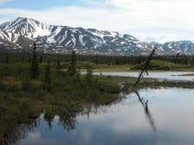 Längs den Denali huvudvägen - Alaska Arkivfoto
