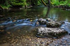 längs floden Royaltyfria Foton